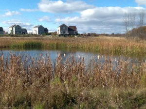 Munroe Brook Feasibility Study