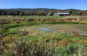 Wetland Restoration